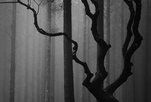 Trees / Dendrology / by Steven Parkhurst