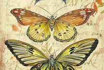animales mariposad
