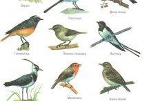 тема перелетные птицы