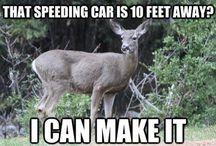 Funny Deer Memes