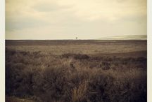 Photograph / Lonely Tree