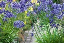 Blue flowering plants