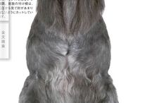 dog haircuts / by Mikayla South