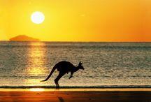 Tapety - zwierzęta - kangury