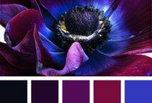Palete de culori