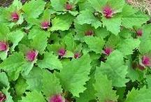 planten verlanglijst por Groene Vinger