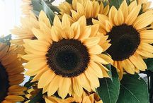 LOVE....MY....SUNFLOWERS....