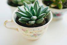 Succulent Plants ideas