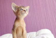 Feline Friendzzzzy