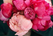 { flowers } / Flowers,flower,fleur,fleurs,jolie,douceur,rose