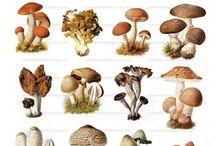 nature illustrations.