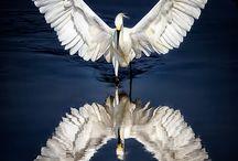 Kuş / Gölge