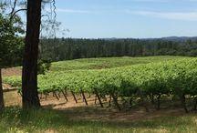The Vines / We grow Syrah and Petite Sirah on our beautiful vineyard in El Dorado county California.