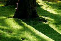 jardines y bosques mágicos