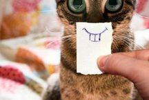 Pisicu