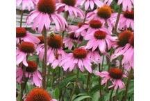 Love flowers & plants / by Jill Tellefson