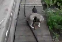 Животные/видео