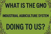 GMO Research