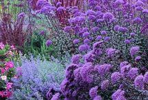 suchomilné  kvety