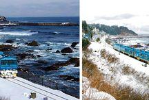 SEA TRAIN, KOREA / รถไฟสายโรแมนติกที่สุดในเกาหลี