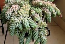 ...my plants...