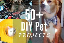 DIY For Your Pet