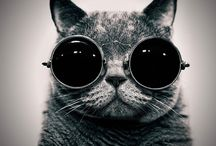 The Cat with Glasses / Andy Prokh Photography - Kate & the cat Tom