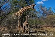 Zambia - Wildlife / by Kunzum #wetravel