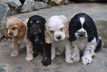 Puppies ❤️❤️❤️
