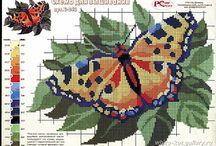 lind borboleta