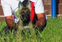 wp-content/uploads/2015/06/adestramento.jpg