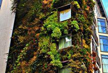 kasvit / Kasvi tuo rauhaa, jatkuvuutta ja toivoa.