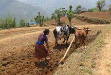 YPARD NEPAL 2014 Family Farming Photo Contest