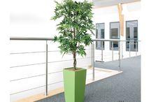 Artificial Plants / Artificial Plants - Huge Range Of Artificial Plants For Your Office - BT Office Furniture UK