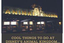 Disney Animal Kingdom / Animal Kingdom ideas