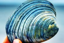 ...pretty.shells...