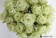 { Rose Varieties }