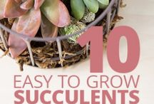 Gardening / Gardening and plant. Cool gardening ideas