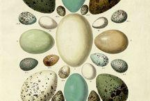 eggs, cages, feeders, houses, nests.... / by P Cruickshank-Schott