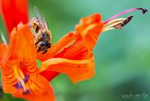 Saeahlee Photography - Insects and Spiders / http://saeah.com