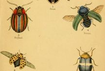 Butterflies  Beetles  Bee