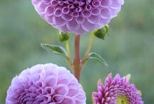 Flowers in the world / Flowers, plantes and herbs.