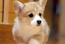 Fluffy creature