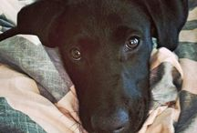 ラブちゃん…Labrador Retriever mix♡ / #dog #犬 #ラブラドール #レトリバー #Labrador  #Retriever #mix