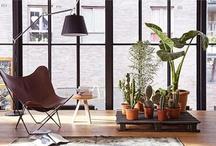 Home Design / by Mark Mangan