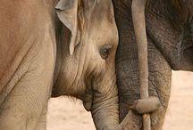 Animals/wildlife / by Brenda Gibson