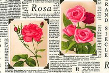 PAPERS - ROSES