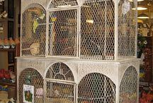 Gouldian Finches & Beautiful Cages