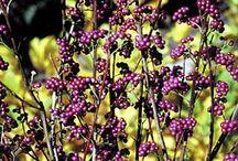Great plants