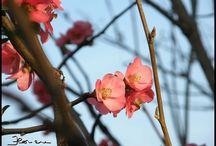Flowers/Fiori